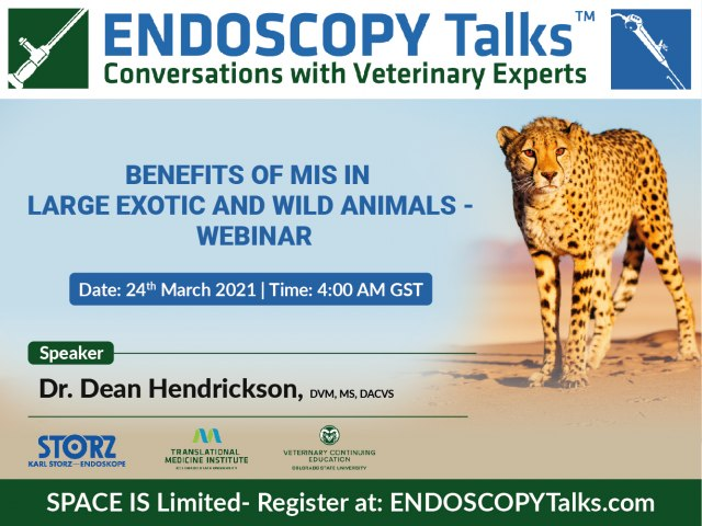 Benefits of MIS in Large Exotic and Wild Animals - Webinar