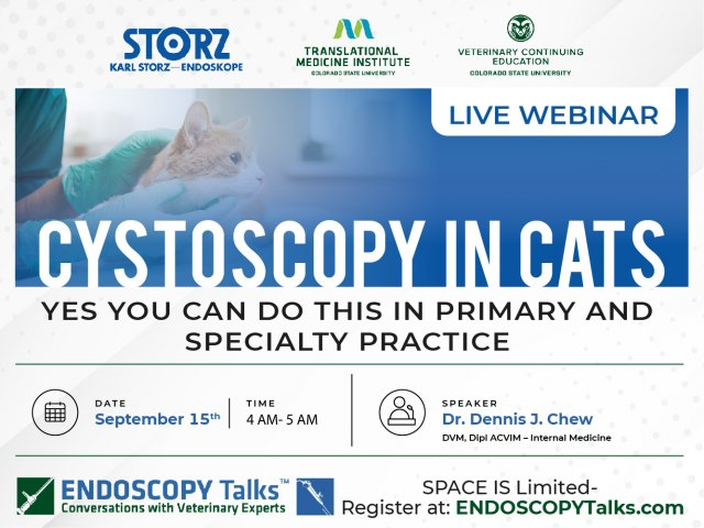 Cystoscopy in Cats - Yes you can do this in Primary and Specialty practice - Webinar