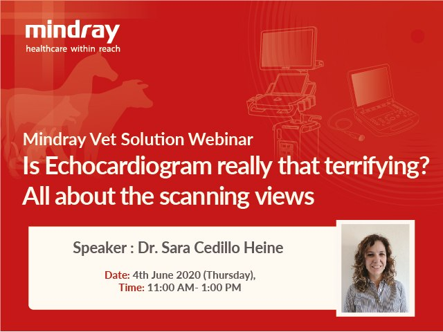 Is Echocardiogram really that terrifying? All about the scanning views