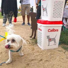 The Dubai Pet Festival 2019