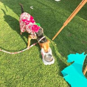 Al Ain Pet Festival 2019
