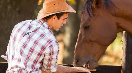 A Basic Guide to Feed Your Horses Right