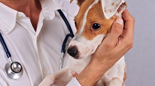 Understanding the Different Methods of Allergy Testing in Animals