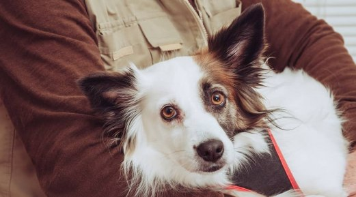 Alternative Therapies for Improving Quality of Life in Senior Pets