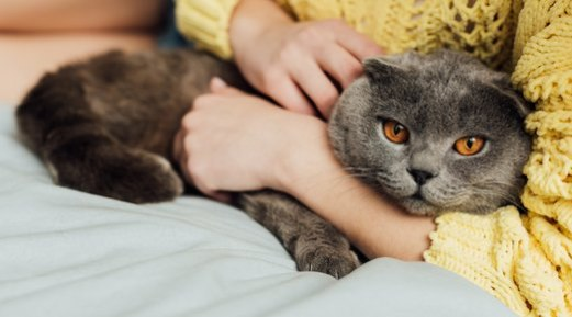 Is Your Cat Refusing to Eat? Its Environment May Be to Blame