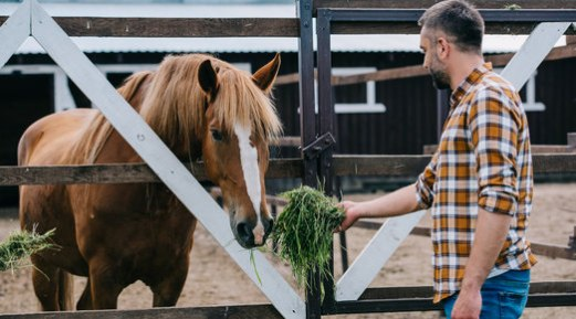 Why You Should Always Opt for a Good Feed for Your Endurance Horse