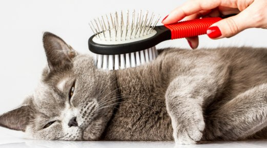 How to Keep Your Cat's Fur Looking at its Best