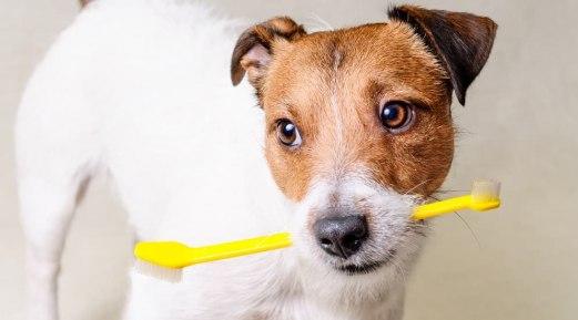 Maintain Your Dog's Oral Hygiene During Festive Season