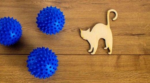 Risks Factors and Prevention Tips for Feline Coronavirus