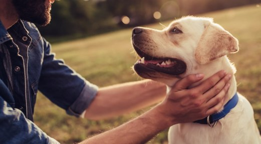 Tips to Prevent and Manage Canine Parvovirus