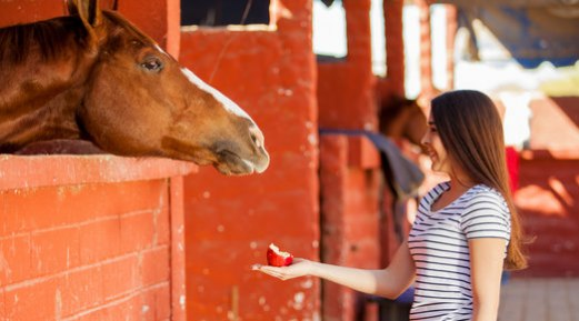 Useful Tips to Select a Horse Feed
