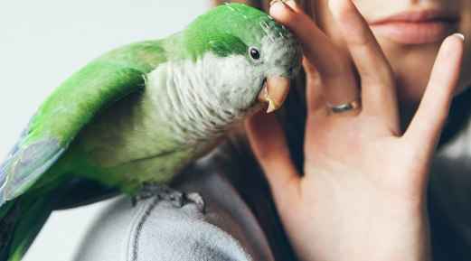 Top Summer Concerns for Pet Birds