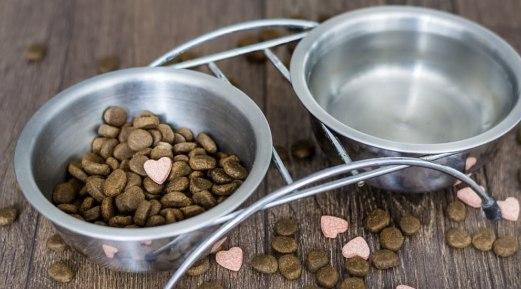 Top Three Reasons to Love Oxyfresh Dog Water Additive