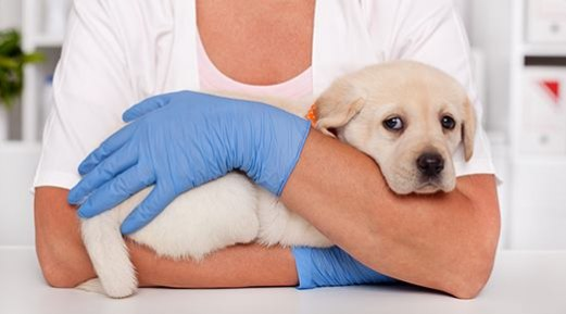 How Safe is Your Veterinary Hygiene and Infection Control Protocol?