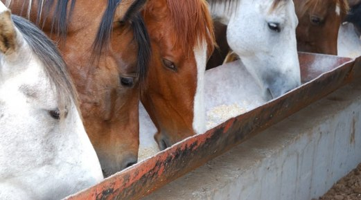 What Are the Benefits of Supplement for High-Performance Equines?