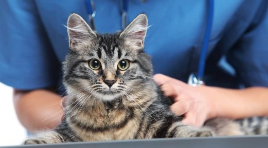 What to Expect During Your Pet's Annual Veterinary Exam