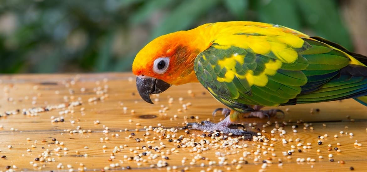 All You Need to Know About Pet Bird Nutrition