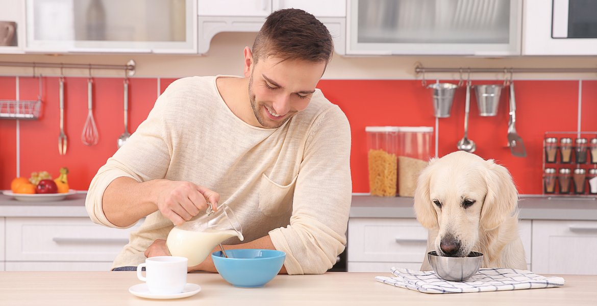 Refusing a Human Food to Dogs