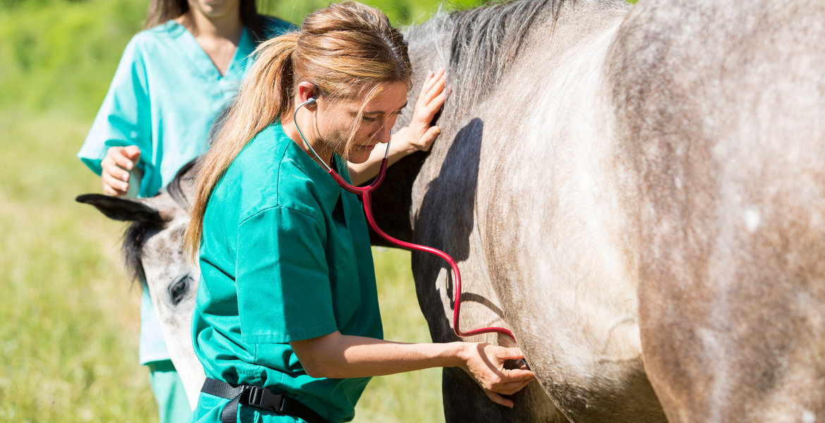 Ask Eurovets Veterinary Suppliers for Help in Horse Health Issues
